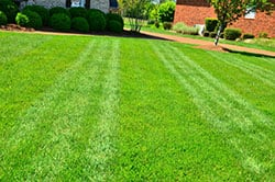 Buckeye elite lawn care Springboro Ohio